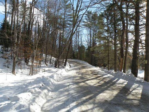Fatherley Woodlot : Newbury : Orange County : Vermont