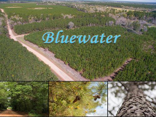 12 Acres Bluewater T1-6 : Livingston : Polk County : Texas