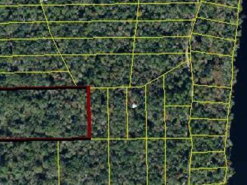 5.6 Acres Near Suwannee River : Mayo : Lafayette County : Florida