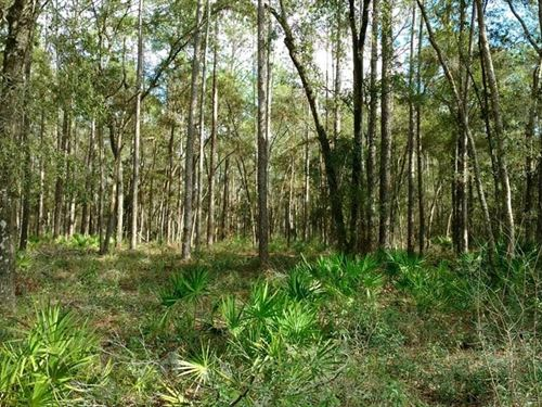 3 Acre Wooded Lot 777079 : Old Town : Dixie County : Florida