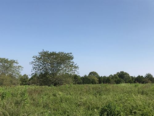 3.6 Acres On Public Land : Ava : Douglas County : Missouri
