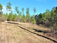 Hunting And Recreational Property : Crawfordville : Taliaferro County : Georgia