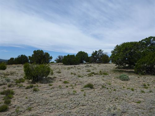 Beautiful Secluded 1 Acre- Rv/Camp : Concho : Apache County : Arizona