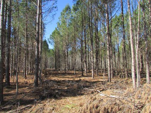 Three Mile Branch Road Tract : Lynchburg : Sumter County : South Carolina