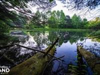 Hidden Falls Meadow of Pisgah Natio : Balsam Grove : Transylvania County : North Carolina