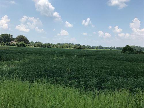 Magnolia Grove 135 : Hernando : Desoto County : Mississippi