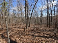 Piedmont Missouri Land 30 Acres : Piedmont : Wayne County : Missouri