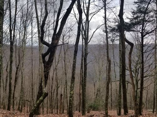 53.3+/-Acres Mature Woods With View : Sewanee : Marion County : Tennessee