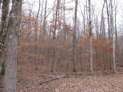 Land Tn, Hardwood Timber & Paved : Waynesboro : Wayne County : Tennessee