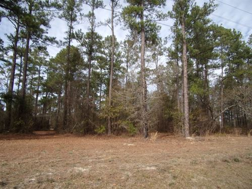 35 Acres Residential Commercial Use : Pembroke : Bryan County : Georgia
