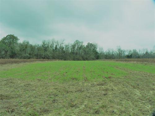 Chavis Farm : Govan : Bamberg County : South Carolina