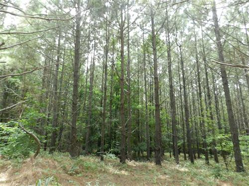 Mature Pine & Hardwood Bottoms Nea : Jumpertown : Alcorn County : Mississippi