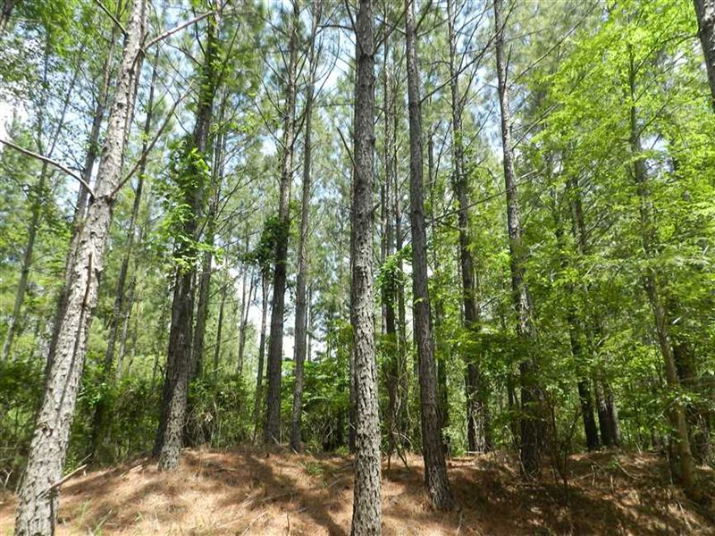 Large Trees, Prime Location With 2 : Jumpertown : Tippah County : Mississippi