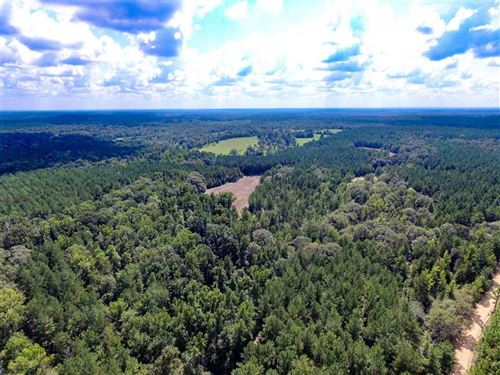 Tremendous Timber Value : Little Texas : Macon County : Alabama