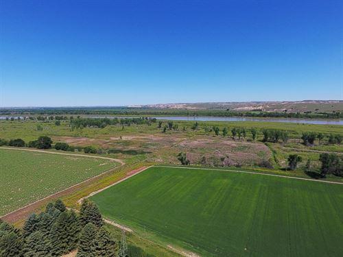 Irrigated Farm Land, Fairview : Fairview : Richland County : Montana