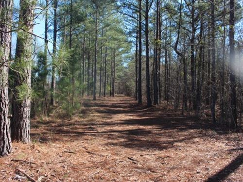 Scenic Hunting Tract With Timber : Fort Valley : Crawford County : Georgia