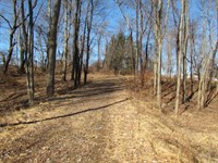 36+/- Acres Of Prime Wildlife Habit : Wapwallopen : Luzerne County : Pennsylvania
