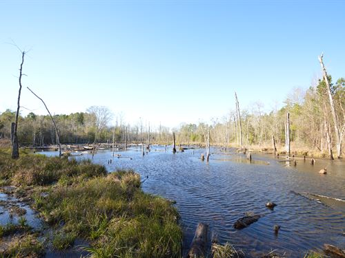 Deepstep Creek 265+/- Acres : Deepstep : Washington County : Georgia