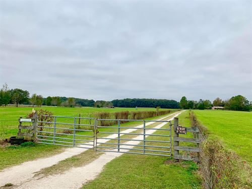 Beautiful 90.59 Acre Country : Newberry : Alachua County : Florida