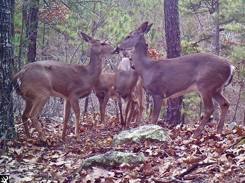 Hunting Land For Sale, Latimer Co : Yanush : Latimer County : Oklahoma