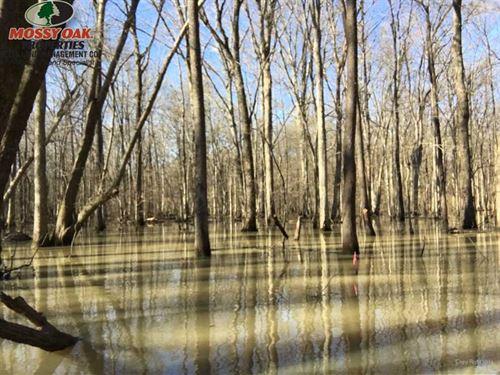 Bayou Deview 84 : Brinkley : Woodruff County : Arkansas