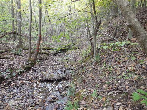 45.4 Acres Larue County, KY : Buffalo : Larue County : Kentucky