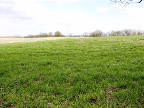 Horse Cattle Farm Ranch Boone : Rocheport : Boone County : Missouri
