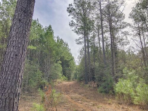 263 Acres Off Fire Tower Road : Newton : Texas