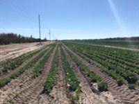 Long & Scott Farms : Mount Dora : Lake County : Florida