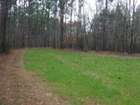 Timber & Hunting Property : Camden : Madison County : Mississippi