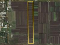 Highlands County Muck Farm : Lake Placid : Highlands County : Florida