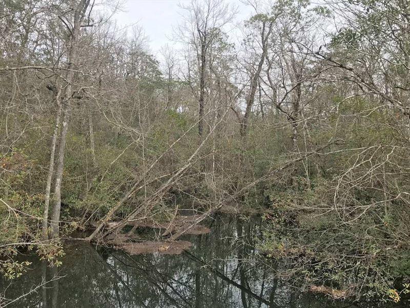Dyas Road Tract : Minnette : Baldwin County : Alabama