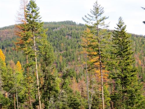 Timberland For Sale : Plains : Sanders County : Montana