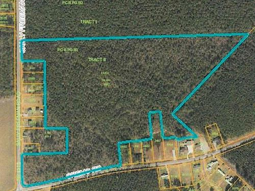 Timberland/Private Hunting Area : Colerain : Bertie County : North Carolina