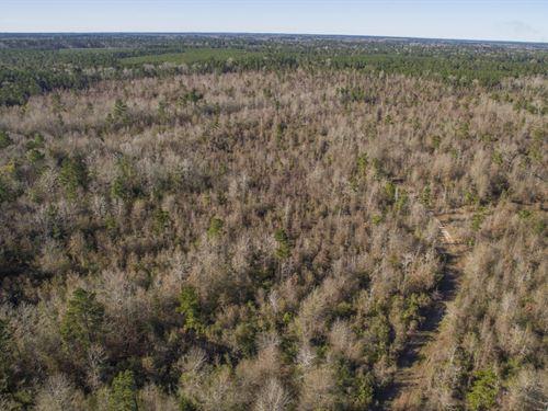 88 Acres Fm 2109 : Huntington : Angelina County : Texas