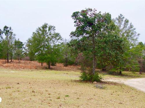 Mud Hill Hunting-Timber Investment : Vernon : Washington County : Florida
