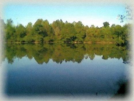 70 Acres w/5 Acre lake : Troy : Pike County : Alabama