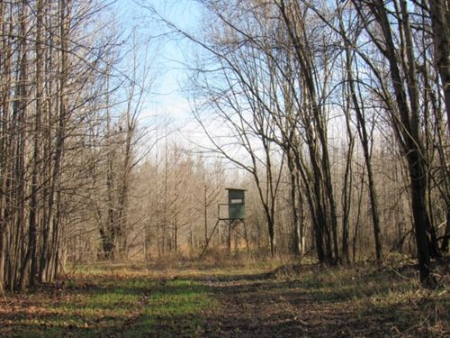 172.36 Acres In Panola County In Ba : Batesville : Panola County : Mississippi