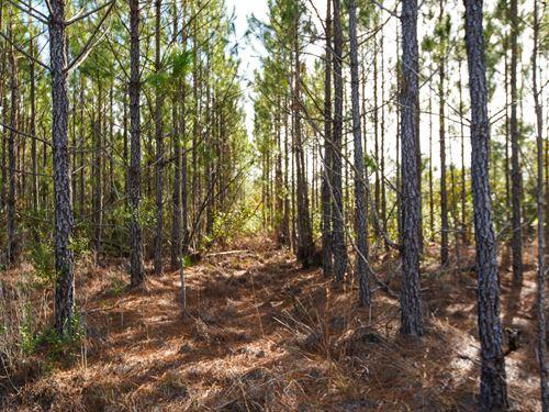 Cowpen Branch : Newington : Effingham County : Georgia