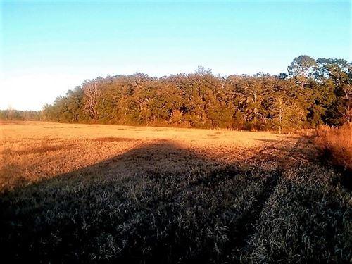 26 Acres Vacant Land Florida : Chiefland : Levy County : Florida