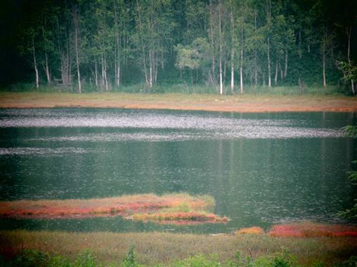 One Acre Parcel On a Small Lake,Th : Kenai : Kenai Peninsula Borough : Alaska