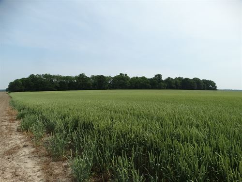 Lee County Arkansas 354 Acres : Marianna : Lee County : Arkansas