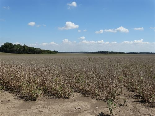 Lee County Grain Tract 630 Ac : Brickeys : Lee County : Arkansas