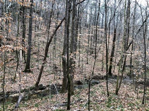 41.7 Acres With Waterfalls : Double Springs : Winston County : Alabama