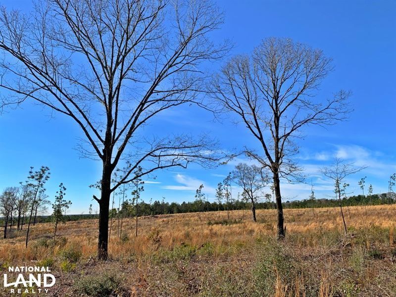 Old Citronelle Road Hunting Recreat : Citronelle : Mobile County : Alabama