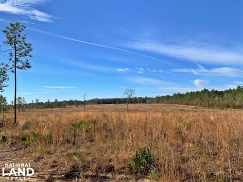 Old Citronelle Road Homesite Tract : Citronelle : Mobile County : Alabama