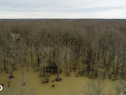 336 Acres Flooded Timber Duck Hu : McCrory : Woodruff County : Arkansas
