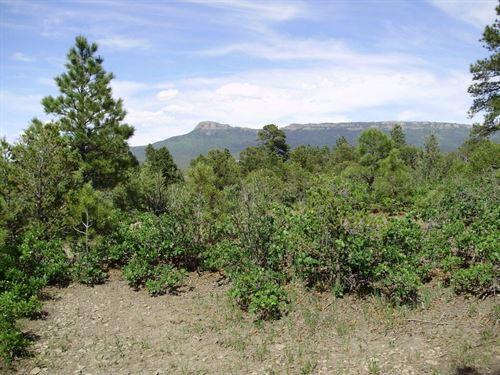 Treed Mountain Acreage Trinidad : Trinidad : Las Animas County : Colorado