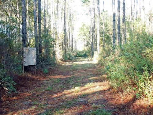 120 Acres Osceola National Forest : Lake City : Columbia County : Florida