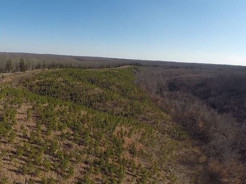 59.11 Acres Great Off Grid : Linden : Perry County : Tennessee